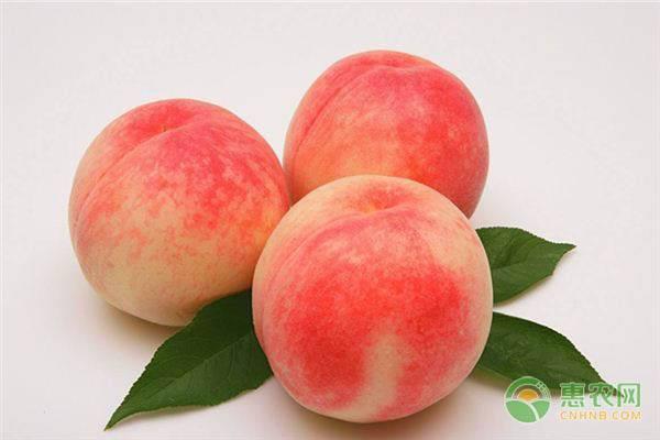 桃子的结构图详细
